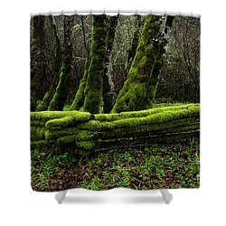 Mossy Fence 3 Shower Curtain by Bob Christopher