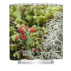 Mossy Forest Shower Curtain