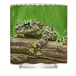 Shower Curtain featuring the photograph Mossy Frog by Nikolyn McDonald