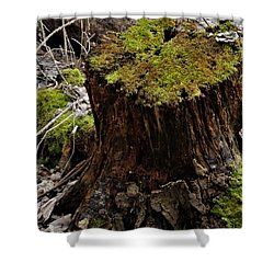 Mossy Stump Shower Curtain