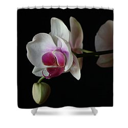 Moth Orchid 1 Shower Curtain by Marna Edwards Flavell