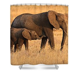 Mother And Baby Elephants Shower Curtain