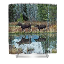 Mother And Baby Moose Reflection Shower Curtain