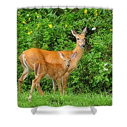Mother And Baby  White-tailed  Deer Shower Curtain