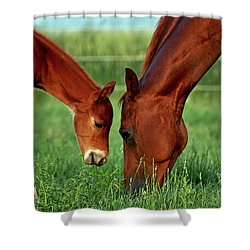 Mother And Foal 3377 H_2 Shower Curtain
