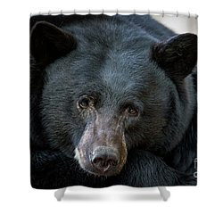 Mother Bear Shower Curtain by Mitch Shindelbower
