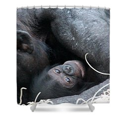Mother Bonobo And Her Baby Shower Curtain