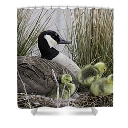 Mother Goose Shower Curtain by Jeannette Hunt