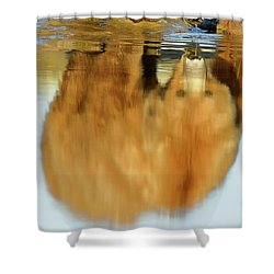 Mother Grizzly Reflection Shower Curtain