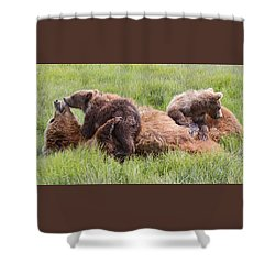 Mother Grizzly Suckling Twin Cubs Shower Curtain