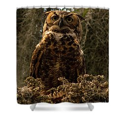 Mother Owl Posing Shower Curtain