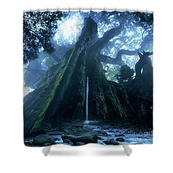 Mother Tree Shower Curtain by Tatsuya Atarashi