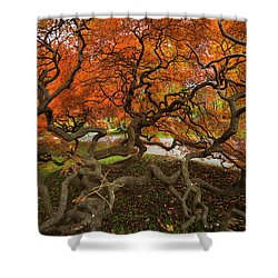 Mount Auburn Cemetery Beautiful Japanese Maple Tree Orange Autumn Colors Branches Shower Curtain