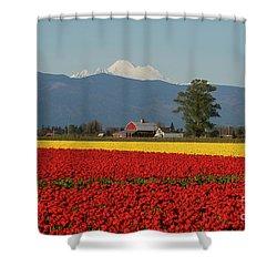 Mount Baker Skagit Valley Tulip Festival Barn Shower Curtain by Mike Reid