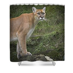 Mountain Lion Shower Curtain