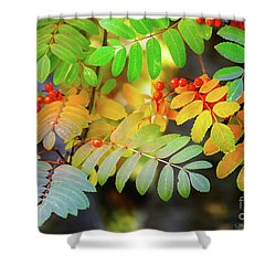 Shower Curtain featuring the photograph Mountain Ash Fall Color by Michele Penner
