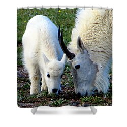 Shower Curtain featuring the photograph Mountain Baby by Karen Shackles
