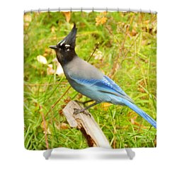 Mountain Blue Jay Shower Curtain