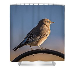 Mountain Bluebird At Sunset Shower Curtain