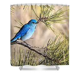Mountain Bluebird In A Pine Shower Curtain