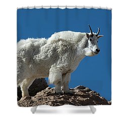Shower Curtain featuring the photograph Mountain Goat 2 by Gary Lengyel