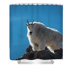 Shower Curtain featuring the photograph Mountain Goat 3 by Gary Lengyel