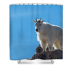 Shower Curtain featuring the photograph Mountain Goat 4 by Gary Lengyel