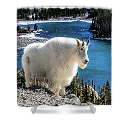 Mountain Goat At Lower Blue Lake Shower Curtain