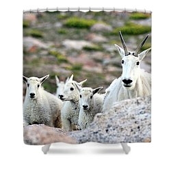 Shower Curtain featuring the photograph Mountain Goat Family Panorama by Scott Mahon