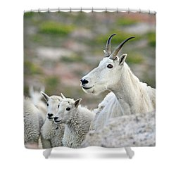 Shower Curtain featuring the photograph Mountain Goat Family by Scott Mahon