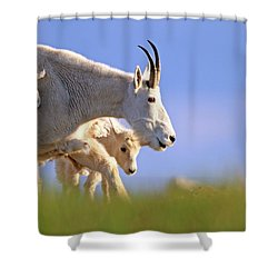 Shower Curtain featuring the photograph Mountain Goat Light by Scott Mahon