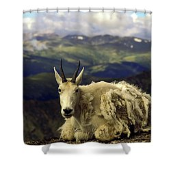 Mountain Goat Resting Shower Curtain by Sally Weigand