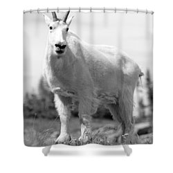 Mountain Goat Shower Curtain by Sebastian Musial