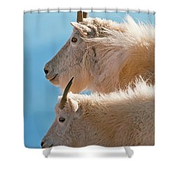 Shower Curtain featuring the photograph Mountain Goats by Gary Lengyel