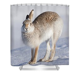 Mountain Hare In The Snow - Lepus Timidus  #2 Shower Curtain