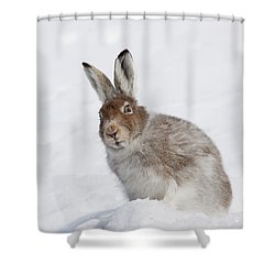 Mountain Hare In Winter Shower Curtain