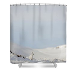 Mountain Hare On Hillside Shower Curtain