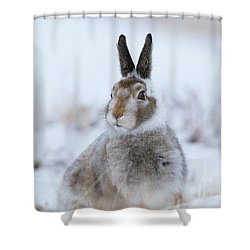 Mountain Hare - Scotland Shower Curtain