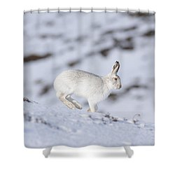 Mountain Hare - Scottish Highlands  #12 Shower Curtain