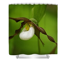 Shower Curtain featuring the photograph Mountain Lady's Slipper by Ben Upham III