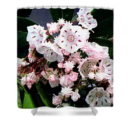 Shower Curtain featuring the painting Mountain Laurel  by Donna Dixon