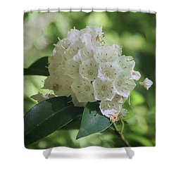 Shower Curtain featuring the photograph Mountain Laurel - Spring by Nikolyn McDonald