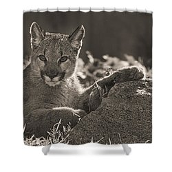 Mountain Lion Cub  Shower Curtain
