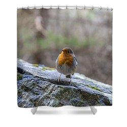 Mountain Robin Shower Curtain