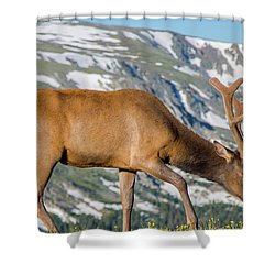 Mountain Top Elk Shower Curtain by John Roberts