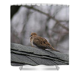 Mourning Dove 20120318_1a Shower Curtain