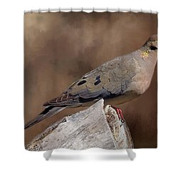 Shower Curtain featuring the photograph Mourning Dove by Donna Kennedy