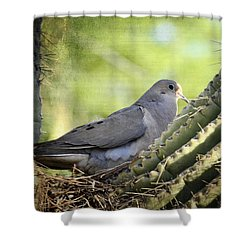 Mourning Dove In The Morning  Shower Curtain by Saija  Lehtonen