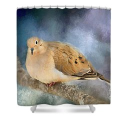Shower Curtain featuring the photograph Mourning Dove Of Winter by Darren Fisher
