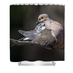 Mourning Dove Profile Shower Curtain